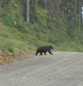 Michelle, the Black Bear